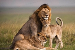 The Lions of the Mara